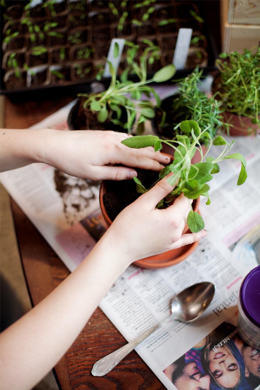 Miten kasvattaa vihanneksia itse