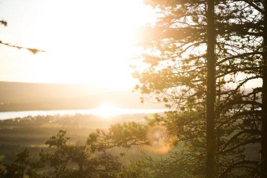 Suomen metsät esittelyssä