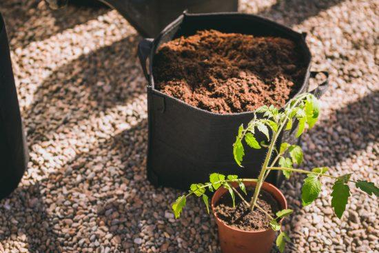 Tasainen lämpö, riittävä kosteus ja pitkä sesonki – kasvihuoneviljely kannattaa!