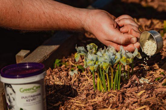 Kevät saapuu kohisten – ota talteen vinkit kotipuutarhan lannoitukseen ja muokkaamiseen!